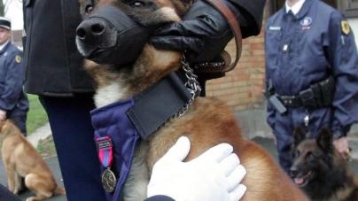 Le chien Daxx reçoit la médaille de la Défense Nationale