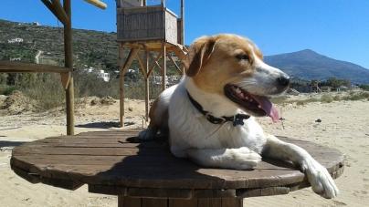 Quelques précautions à prendre lorsque vous emmenez votre chien à la plage