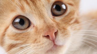 Un chat sauvé par le sang d'un chien !