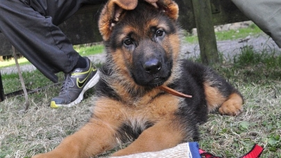 Quels documents demander pour l'achat d'un chien ou d'un chat ?