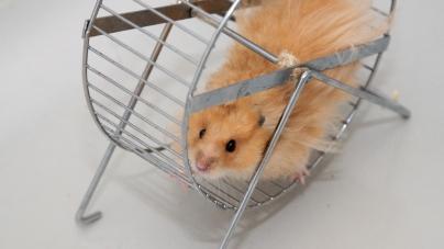 Installez une roue d'exercice pour vos animaux
