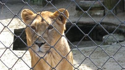 Saisis de 160 animaux dans des animaleries de Paris