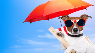 Vacances d'été: faites attention à la chaleur pour les animaux de compagnie!