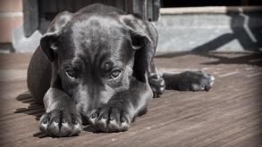 Quelle est la meilleure assurance pour les animaux ?