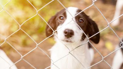 De plus en plus d'adoptions d'animaux abandonnés