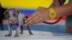 Vétérinaire de garde : un allié indispensable