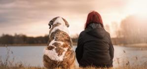 Bons à savoir avant de partir en randonnée avec son chien