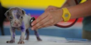 N'oubliez pas le contrôle annuel de votre chien chez le vétérinaire