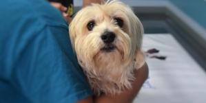 Quels sont les soins qui sont couverts par une mutuelle pour chiens ?