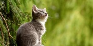 Connaissez-vous les droits de vos animaux ?