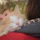 3 bonnes raisons pour câliner votre animal de compagnie quotidiennement