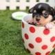 Alimentation du chien : importance des vitamines