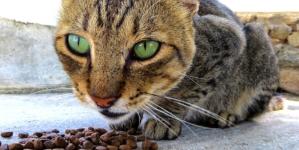 Bien contrôler l'alimentation de son chat