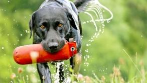 Développez une belle complicité avec un chien qui aime jouer