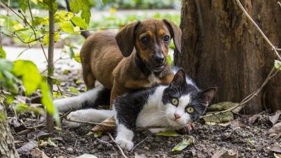 Des mesures seront bientôt prises pour éviter l'abandon des animaux