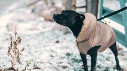 Comment protéger votre chien du froid ?