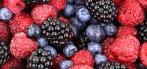 Les fruits toxiques pour les chiens