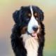 Comment corriger les mauvais comportements de votre chien ?