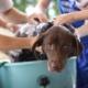 Gérer la toilette de son animal pendant le confinement