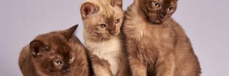 Comment entretenir les griffes de votre chat ?