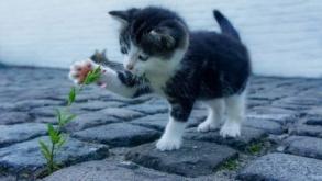 Pourquoi et comment divertir son chat ?