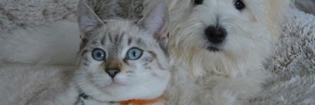 Comment faire cohabiter chien et chat sans accroc ?