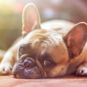 Comment prendre soin de la peau de son chien en été