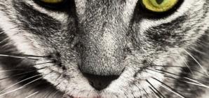 Comment préserver l'instinct de prédateur de son chat ?