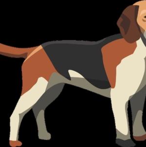 Que faire quand on retrouve un chien en divagation ?