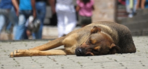 Que faire lorsqu'on retrouve un chien errant ?