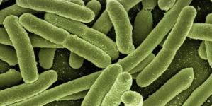 Que savoir de la zoonose ?