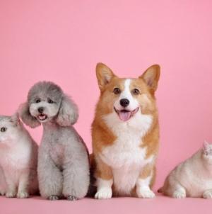 Assurance pour animal domestique : quand a-t-on droit à des indemnités ?