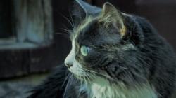 Quelles maladies cutanées peut transmettre le chat et comment y remédier ?