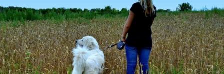Comment organiser ses sorties avec son chien ?
