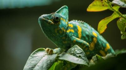 Quels sont les animaux de compagnie les plus exotiques en France ?