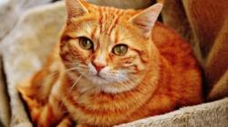 Comment prévenir et soigner les infections parasitaires chez son chat ?