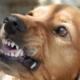 Morsure d'un chien : que faire ?