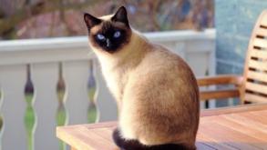 Dépression chez le chat : comment s'en rendre compte ?