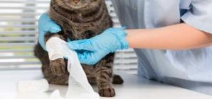 Comment choisir la meilleure assurance pour la santé de son chat ?
